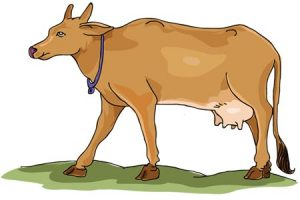Indian cow clipart image png transparent stock Indian cow clipart 1 » Clipart Station png transparent stock