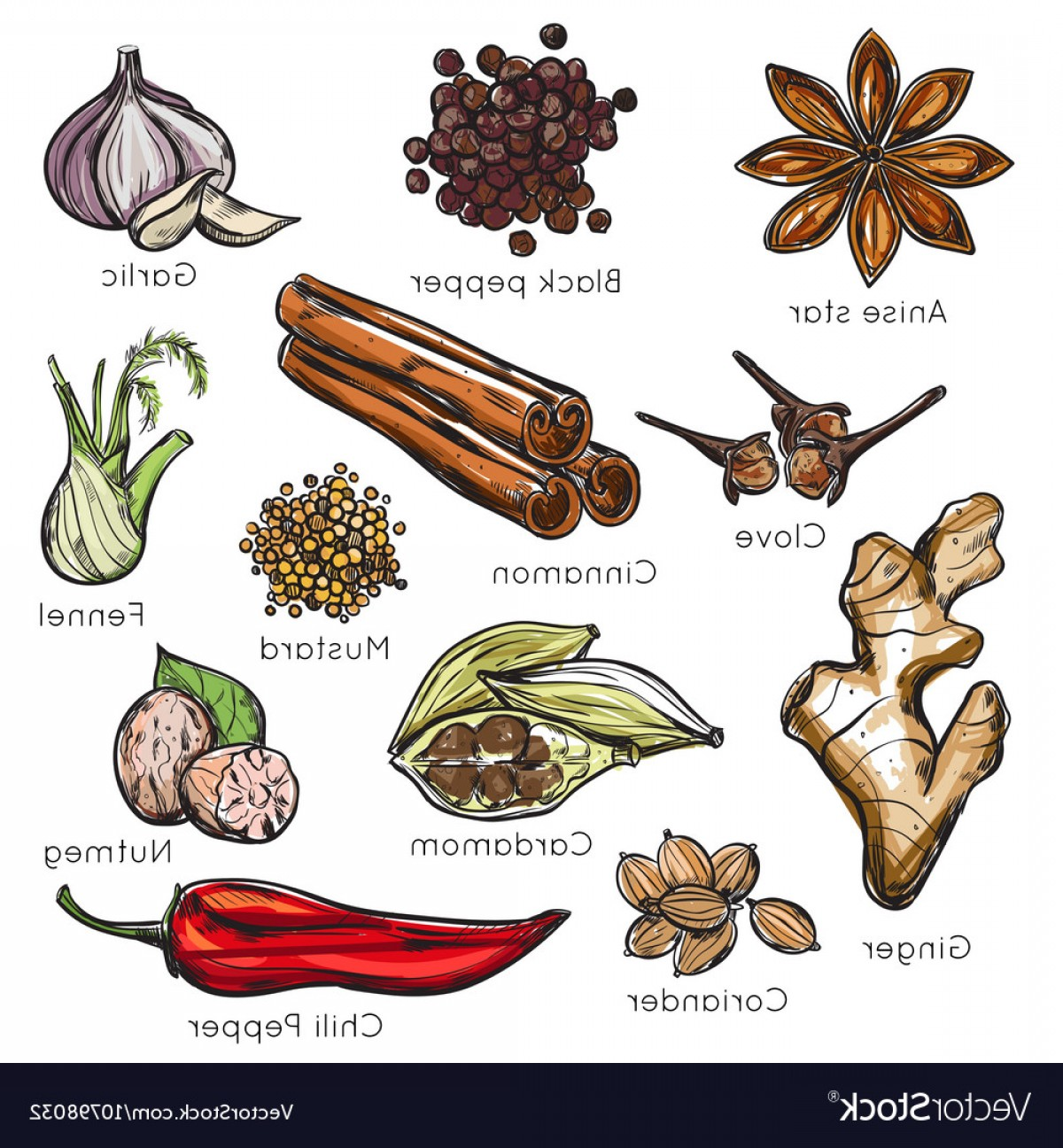 Indian spices clipart download Indian Spices Herbs Icon Set Vector | SOIDERGI download