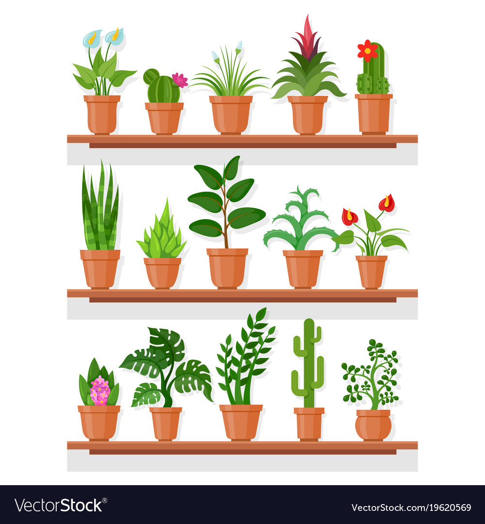 Indoor plant clipart clip black and white library Indoor plants on shelf clip black and white library