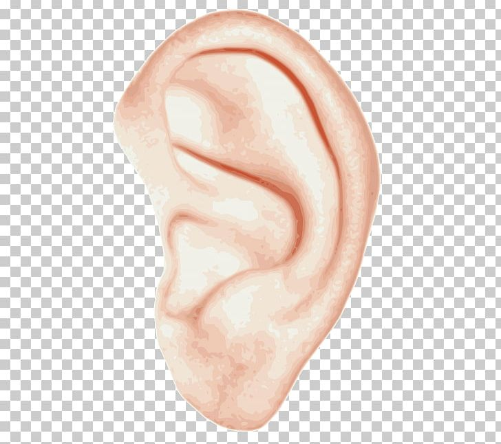 Inner ear clipart png free download Ear Anatomy Inner Ear Hearing PNG, Clipart, Anatomy, Chin ... png free download