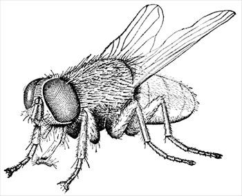 Insects popping out of a book clipart vector freeuse download House Fly Free Clipart | CreepValley | Insect coloring pages ... vector freeuse download