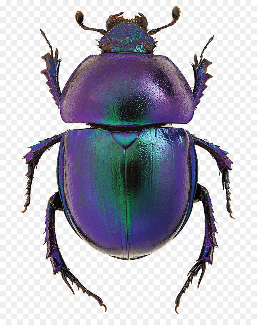 Insects popping out of a book clipart graphic free download Dung Beetle Clipart transparent - Free ... | Design | Insect ... graphic free download