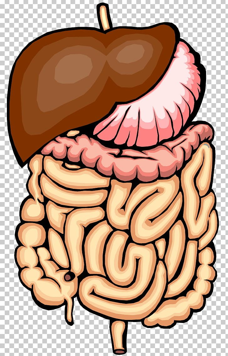 Intenstine clipart svg black and white download Gastrointestinal Tract Small Intestine Large Intestine PNG, Clipart ... svg black and white download