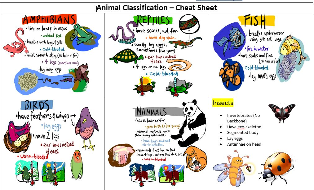 Invertrates classification clipart graphic royalty free download Classification - Micheal Barron\'s Digital Success Lab graphic royalty free download