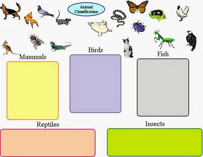 Invertrates classification clipart clip art royalty free library Vertebrates And Invertebrates Worksheets Vertebrates and ... clip art royalty free library