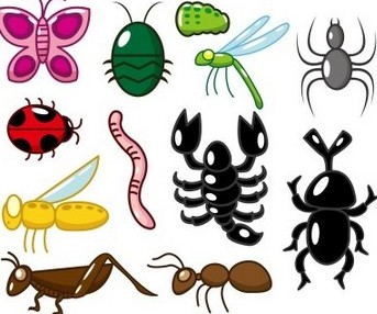 Invertrates classification clipart jpg transparent download Lesson Plan of Classification & Characteristics of Animals ... jpg transparent download
