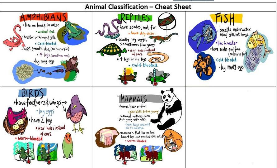 Invertrates classification clipart clip art stock Animals classification - Página web de triptoenglish clip art stock