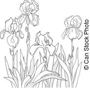 Iris clipart black and white clip art transparent download Iris Clipart and Stock Illustrations. 14,864 Iris vector EPS ... clip art transparent download