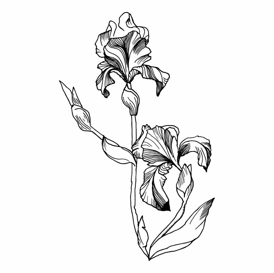 Iris clipart black and white image black and white stock Single Iris Flower Illustration , Png Download - Black And ... image black and white stock