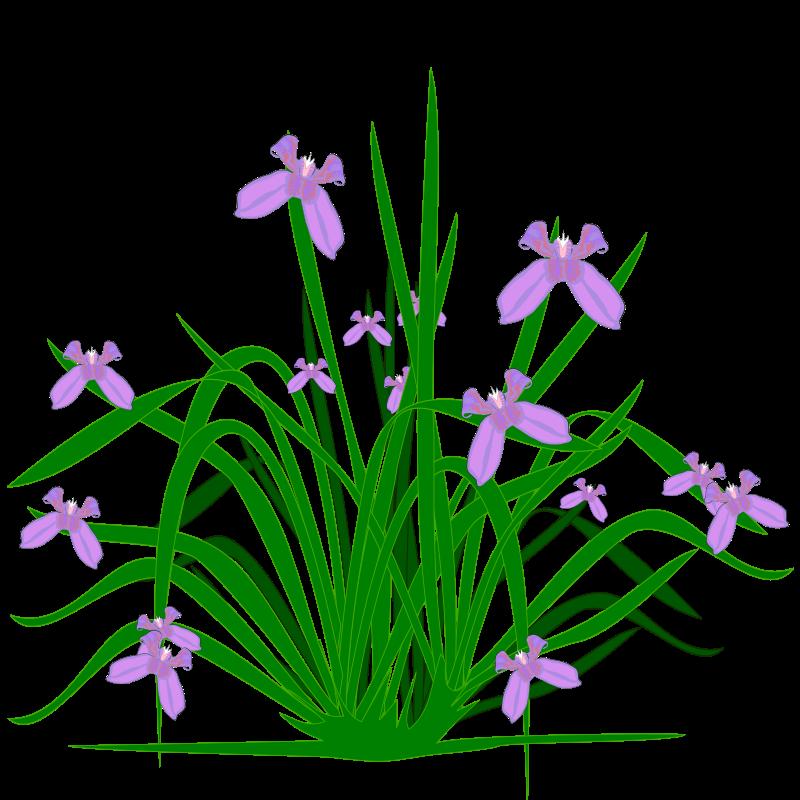 Iris flower clipart banner black and white Clipart - Iris banner black and white