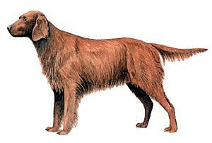 Irish setter clipart picture freeuse library Free Irish-Setter Clipart - Free Clipart Graphics, Images ... picture freeuse library
