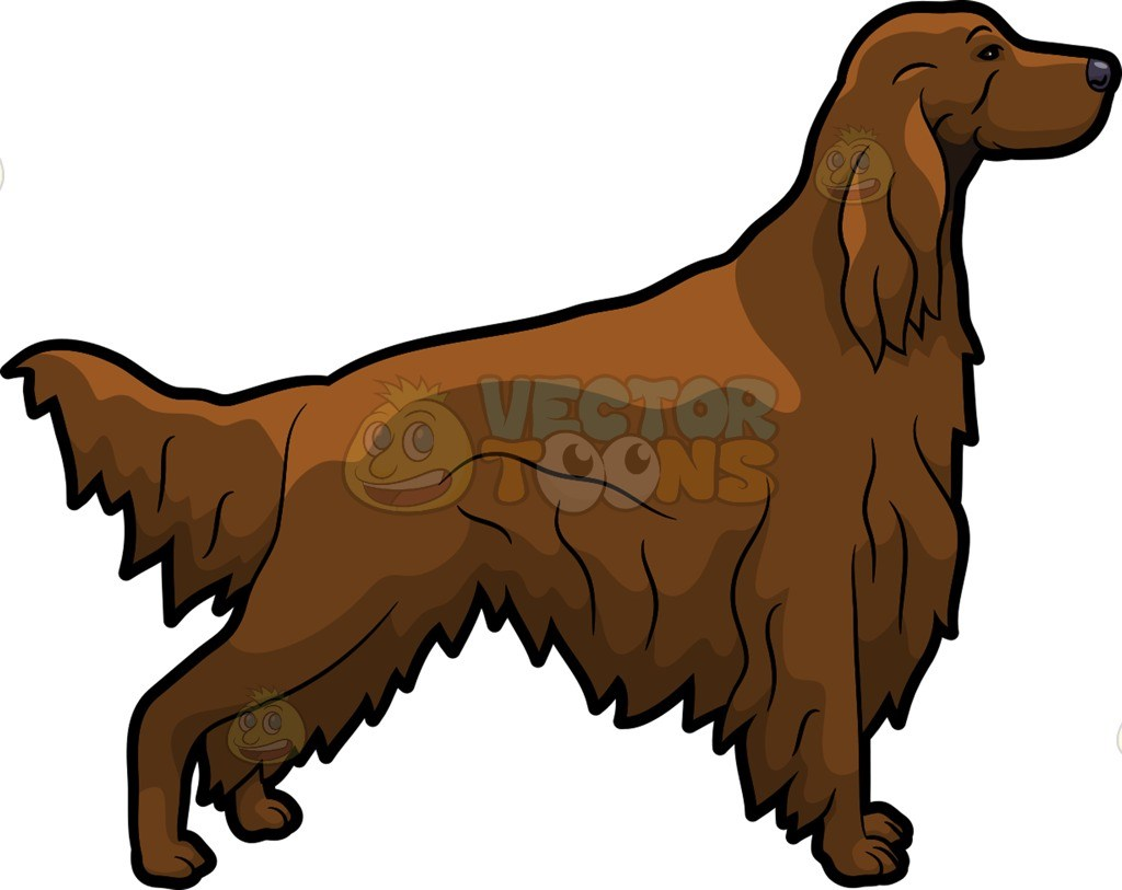 Irish setter clipart graphic freeuse library An Irish Setter pet dog with a good form » Clipart Portal graphic freeuse library