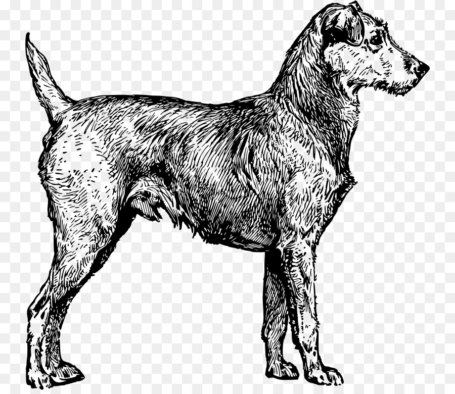 Irish wolfhound clipart clip art library Wolf Cartoon png download - 800*772 - Free Transparent Irish ... clip art library