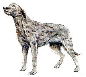 Irish wolfhound clipart clipart black and white Free Dog Clipart - Clipart Picture 12 of 342 clipart black and white