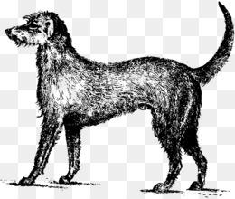 Irish wolfhound clipart black and white library Download irish wolfhound clipart Irish Wolfhound Irish ... black and white library