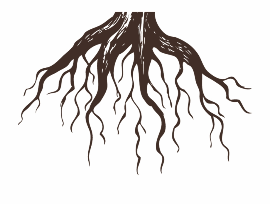 Isla mujeres clipart clip freeuse stock Roots Clinic Isla Mujeres - Drawing Roots Of A Tree, Transparent Png ... clip freeuse stock