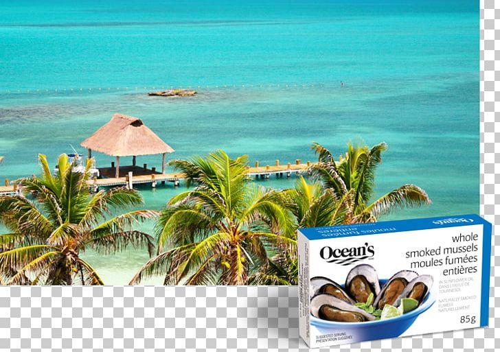 Isla mujeres clipart svg stock Caribbean Isla Holbox Vacation Isla Mujeres Caribe PNG, Clipart ... svg stock