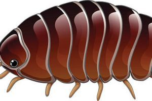 Isopod clipart banner transparent library Isopod clipart 2 » Clipart Portal banner transparent library