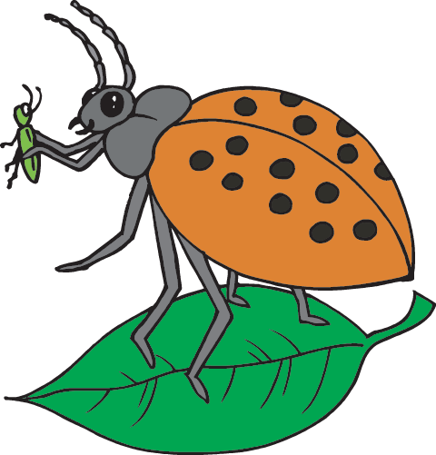 It s a time of your life cliparts a bugs cliparts image royalty free library Insects: Facts (Science Trek: Idaho Public Television) image royalty free library