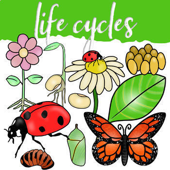 It s a time of your life cliparts a bugs cliparts graphic transparent stock Life Cycle Clip Art Growing Bundle graphic transparent stock