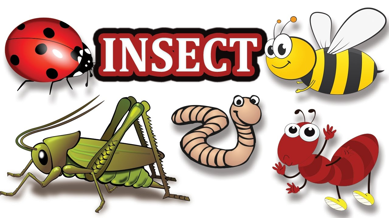 It s a time of your life cliparts a bugs cliparts clip freeuse stock Insects Pictures for Kids-Insect Name-kids vocabulary clip freeuse stock