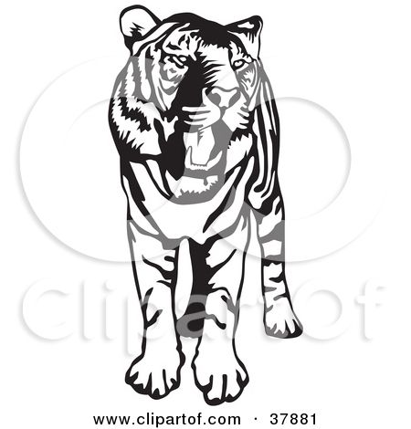 Its going to be fine clipart vector transparent library Clipart Illustration of a Standing Black And White Tiger ... vector transparent library
