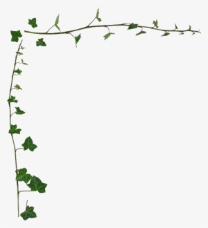 Ivy border clipart free image free download Ivy Border PNG, Transparent Ivy Border PNG Image Free ... image free download