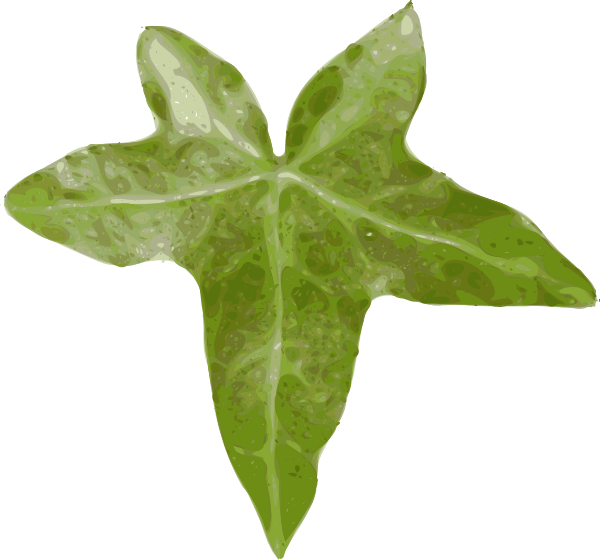 Ivy flower clipart graphic transparent library Ivy Leaf Clip Art at Clker.com - vector clip art online, royalty ... graphic transparent library