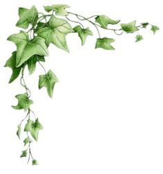 Ivy frame clipart jpg free library ivy border corner - Google Search | Ivy Art/ill. | Vine ... jpg free library