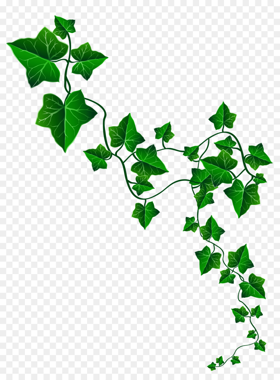 Ivy vine curved frame clipart banner royalty free library Free Vines Transparent Background, Download Free Clip Art ... banner royalty free library
