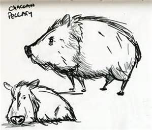 Jabelinas clipart black and white graphic royalty free download drawing a javelina - Bing images | Happy Javelinas in 2019 ... graphic royalty free download