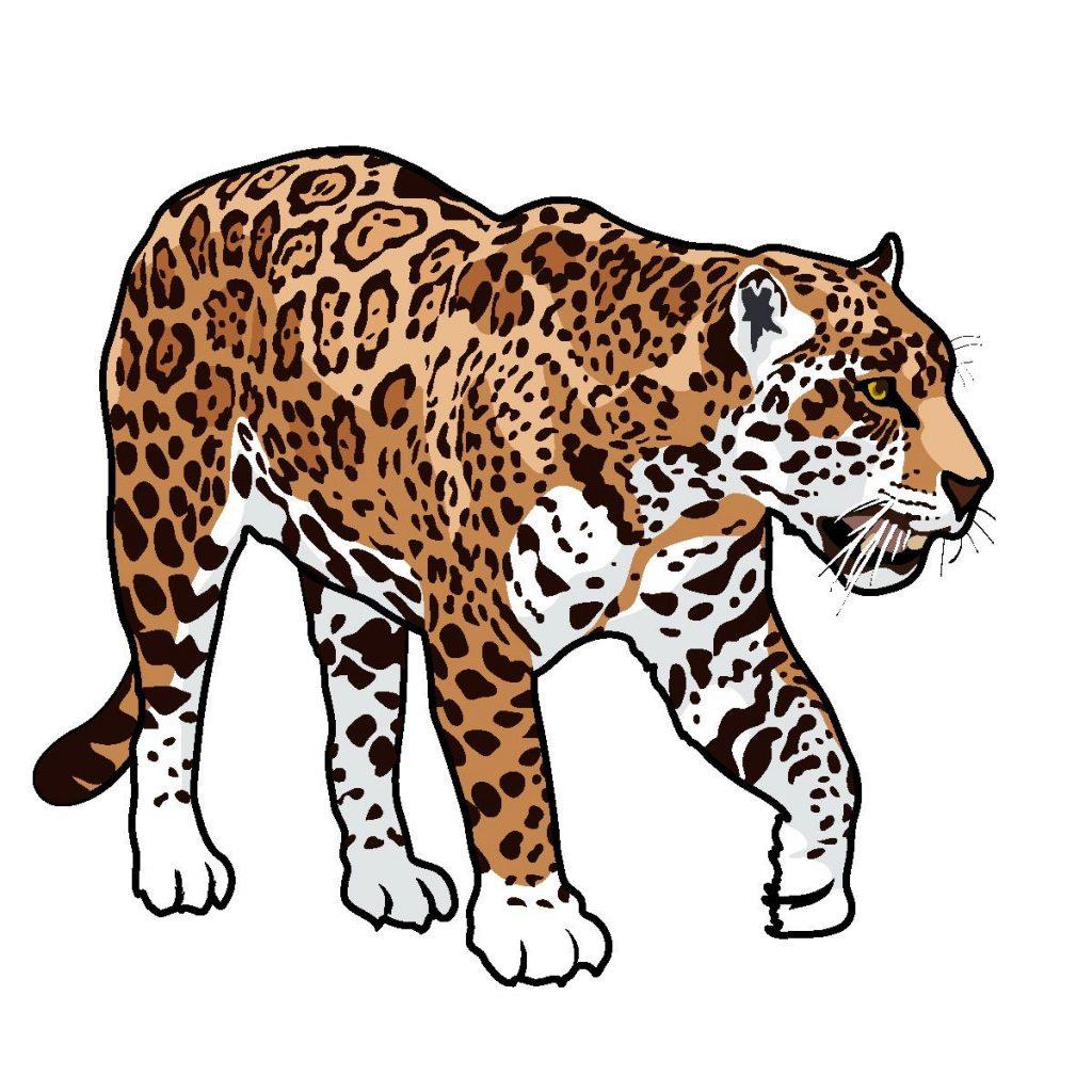 Jaguar clipart image freeuse download 93+ Jaguar Clipart | ClipartLook image freeuse download