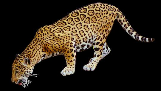 Jaguar clipart transparent vector black and white stock Jaguar PNG Transparent Images | PNG All vector black and white stock