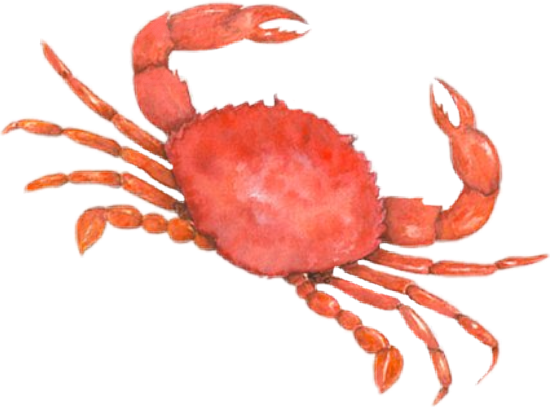 Jaiba clipart png freeuse stock cangrejo crab jaiba mar sea playa pez... png freeuse stock