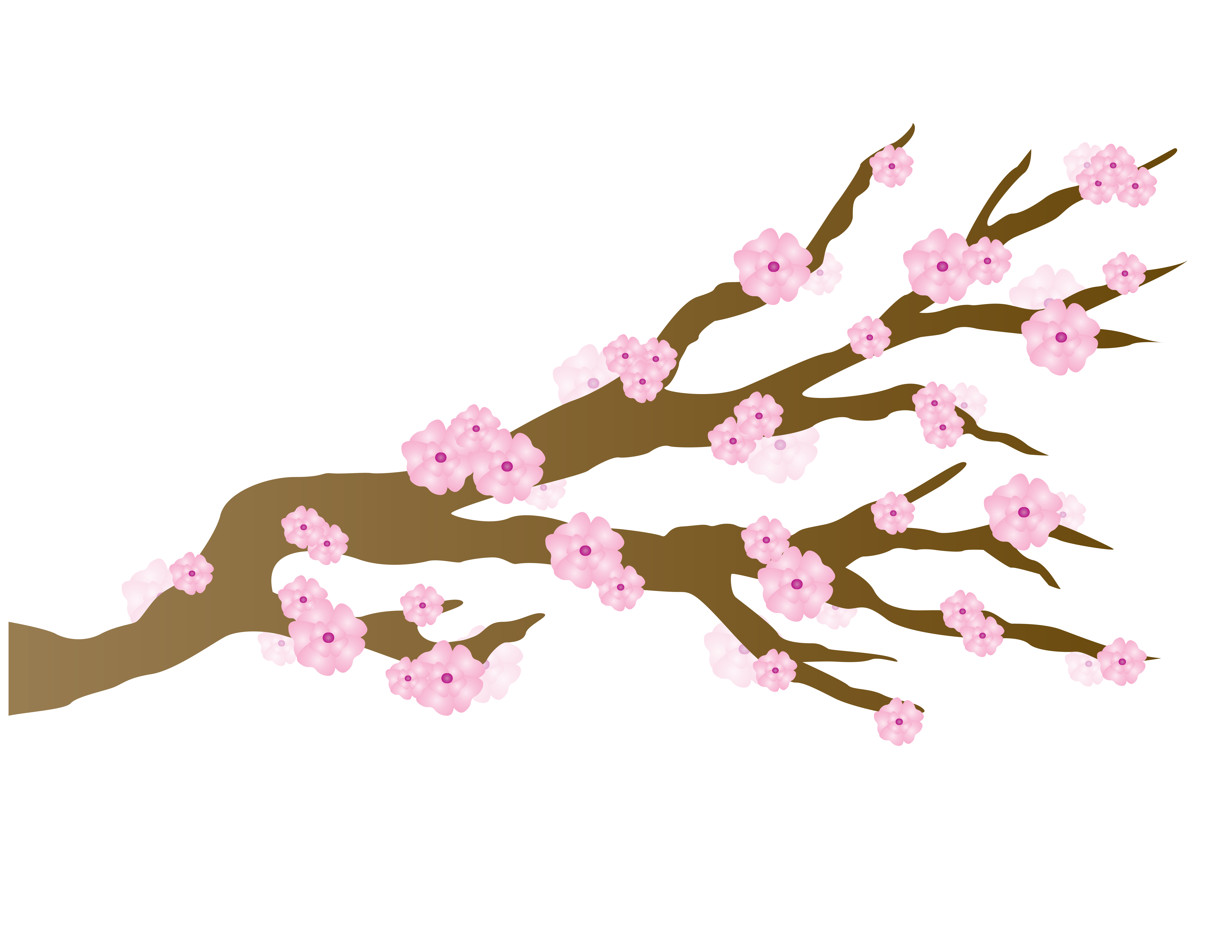 Pink cherry blossoms japanese draft free image graphic stock