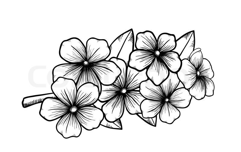Japanese cherry blossom black and white clipart graphic freeuse download japanese flower drawing styles - Google Search | Art - B&W ... graphic freeuse download