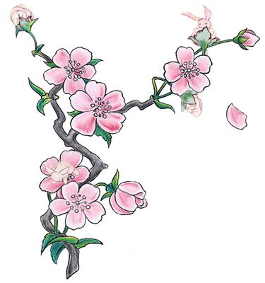 Japanese cherry blossom black and white clipart png freeuse library Cherry Blossom Illustration Pink Flowers Clipart | Just Free Image ... png freeuse library
