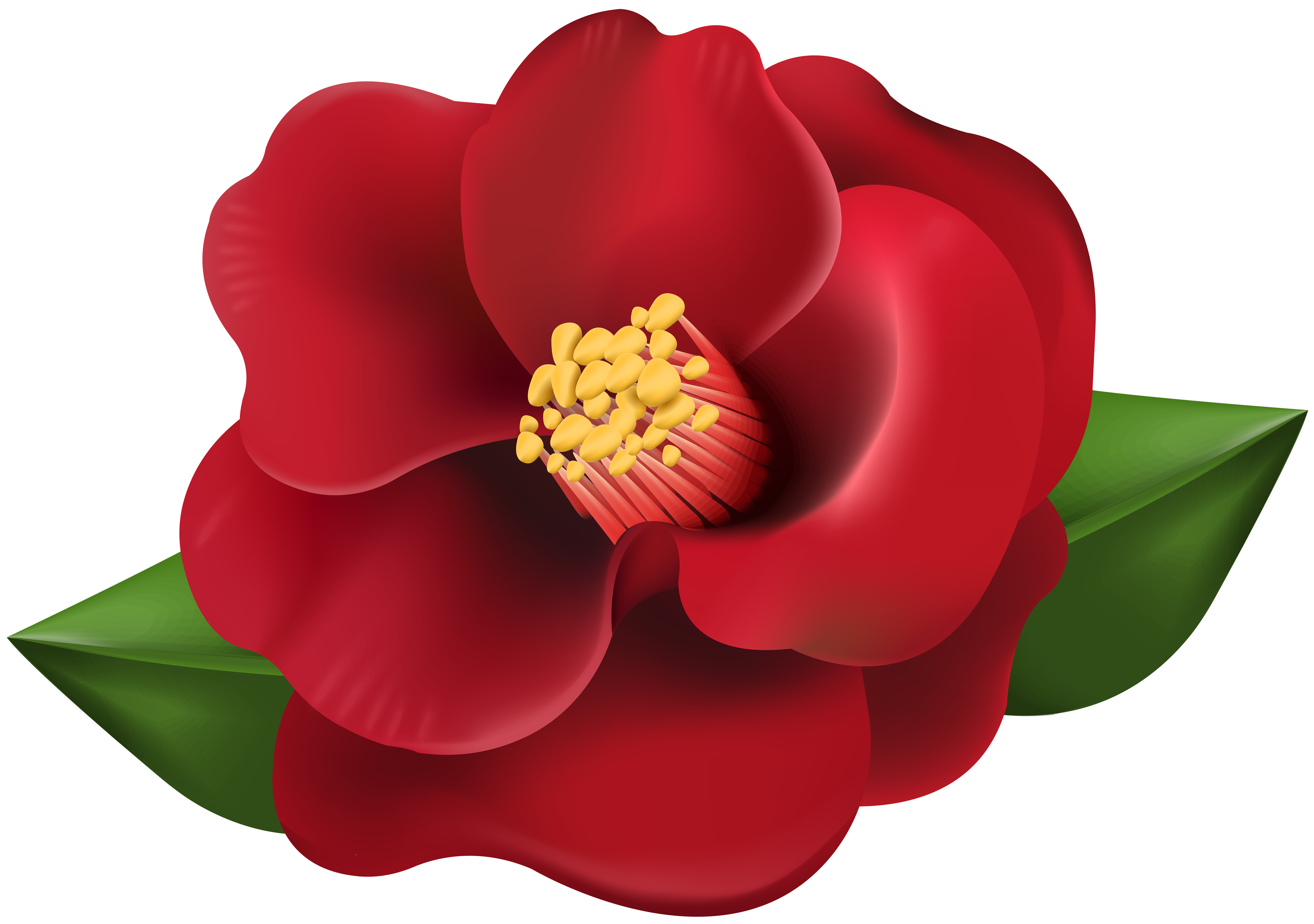 Red Flower Transparent Image   Gallery Yopriceville - High-Quality ... free download