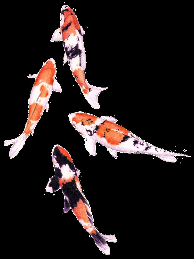 Japanese koi fish clipart jpg transparent library Pin by Rachel Watson on Koi | Pinterest | Koi, Tattoo and Fish art jpg transparent library