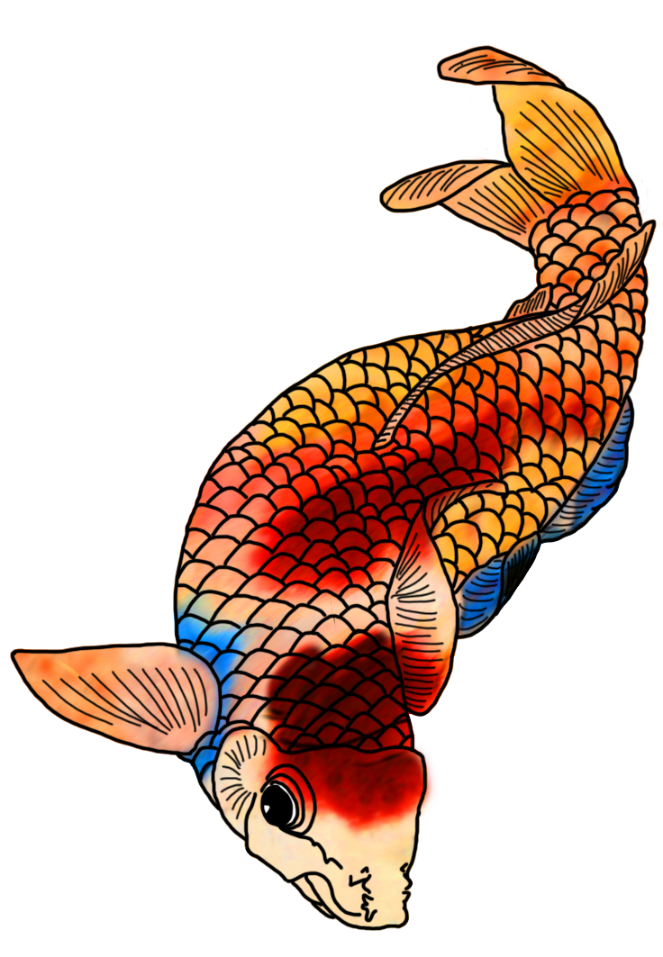 Japanese koi fish clipart transparent stock Colorful Koi Fish Drawings transparent stock