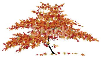 Japanese maple clipart
