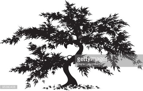 Japanese maple tree clipart image royalty free stock Japanese Maple Tree premium clipart - ClipartLogo.com image royalty free stock