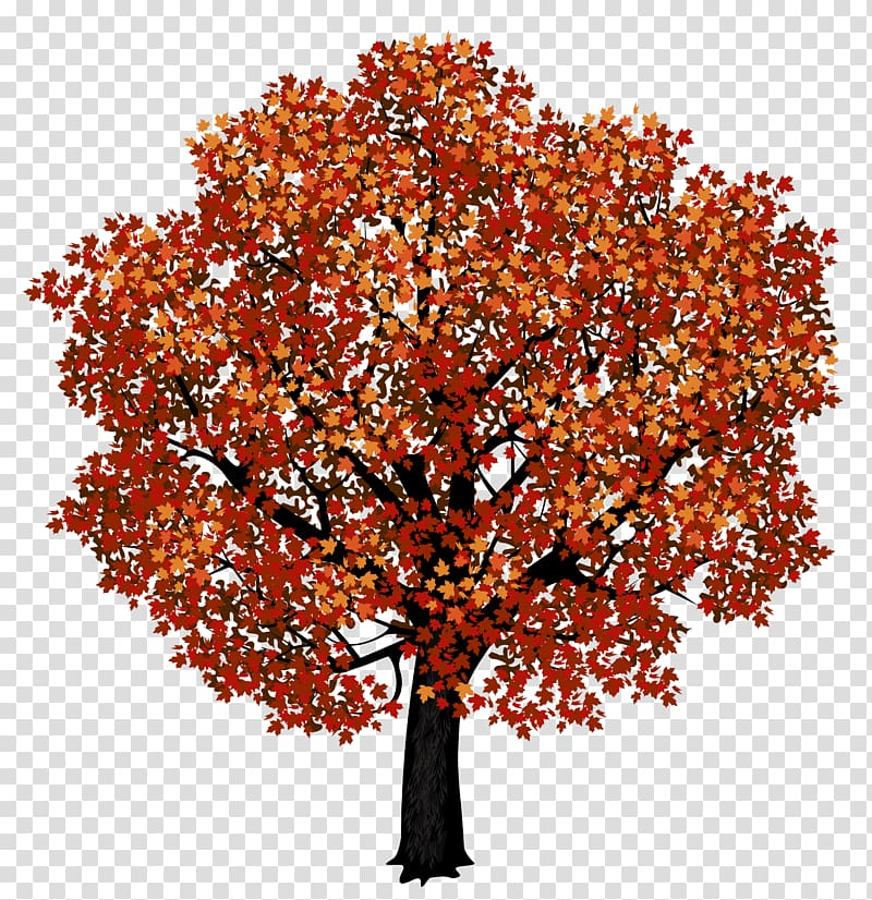 Japanese maple clipart banner library stock Tree painting, Red maple Japanese maple Autumn leaf color , Red ... banner library stock