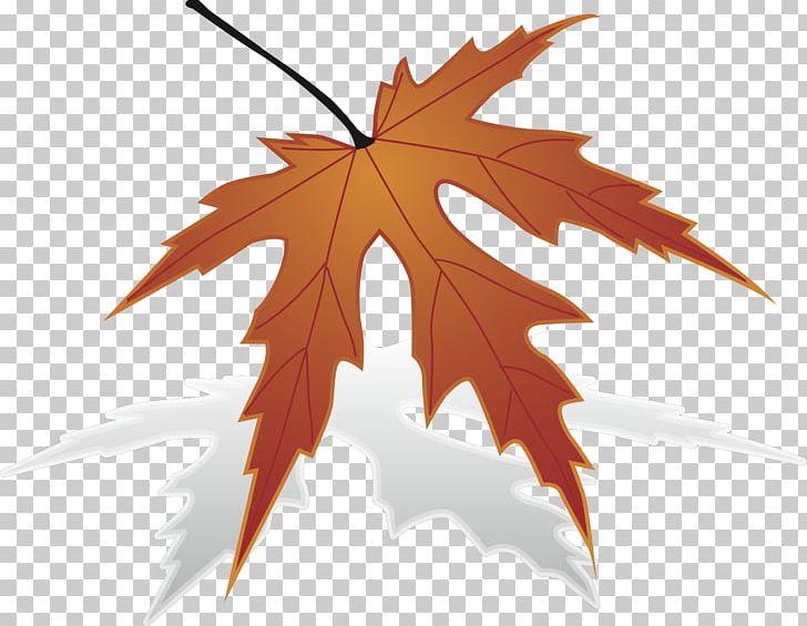 Japanese maple clipart image transparent Japanese Maple Maple Leaf PNG, Clipart, Description, Japanese Maple ... image transparent