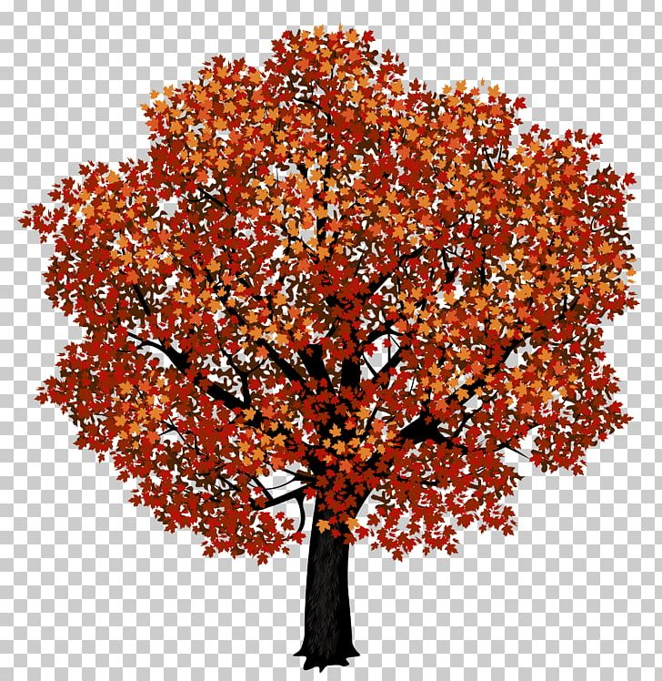 Japanese maple leaf clipart image transparent library Red Maple Japanese Maple Autumn Leaf Color PNG, Clipart, Autumn ... image transparent library