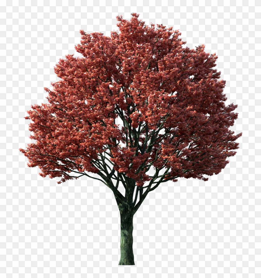 Japanese maple tree clipart vector freeuse library Clipart Transparent Library Fall Tree Clipart Png - Japanese Maple ... vector freeuse library