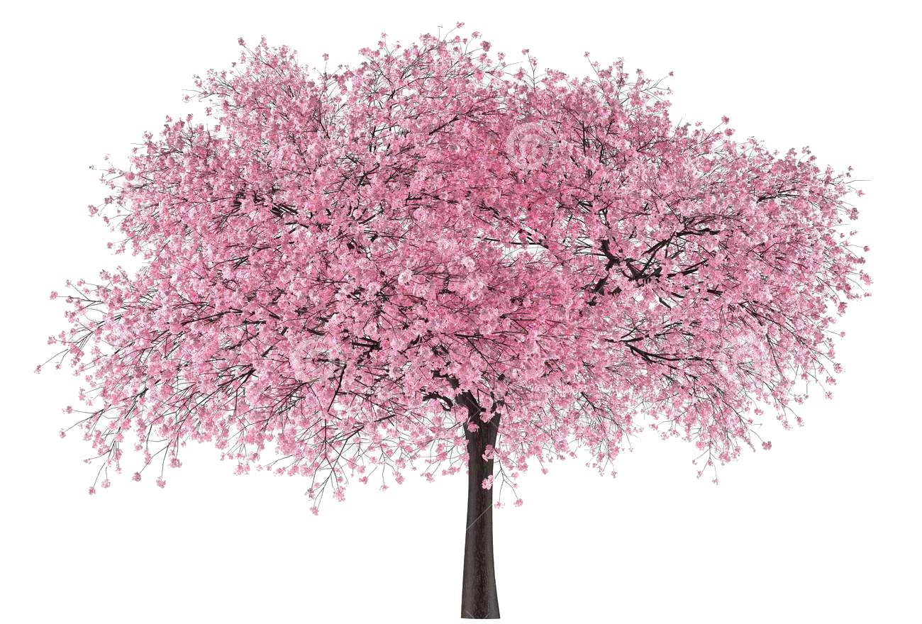 Japanese tree clipart royalty free download japan-tree-sakura.png (1300×880) | cerejeira | Pinterest royalty free download