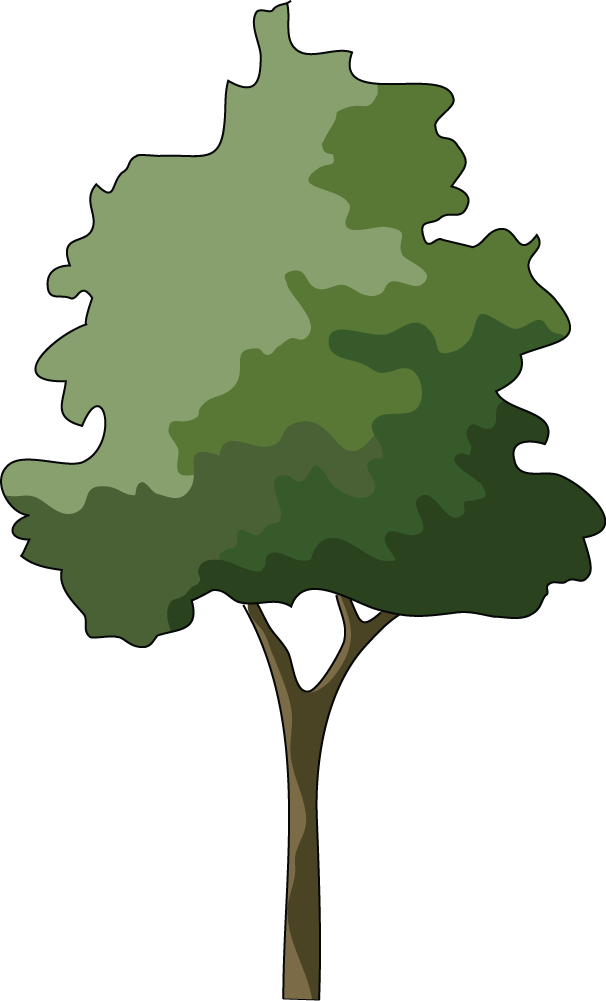 Japanese tree clipart graphic royalty free Branch Japanese maple Tree Clip art - Trees Illustrations 606*1001 ... graphic royalty free