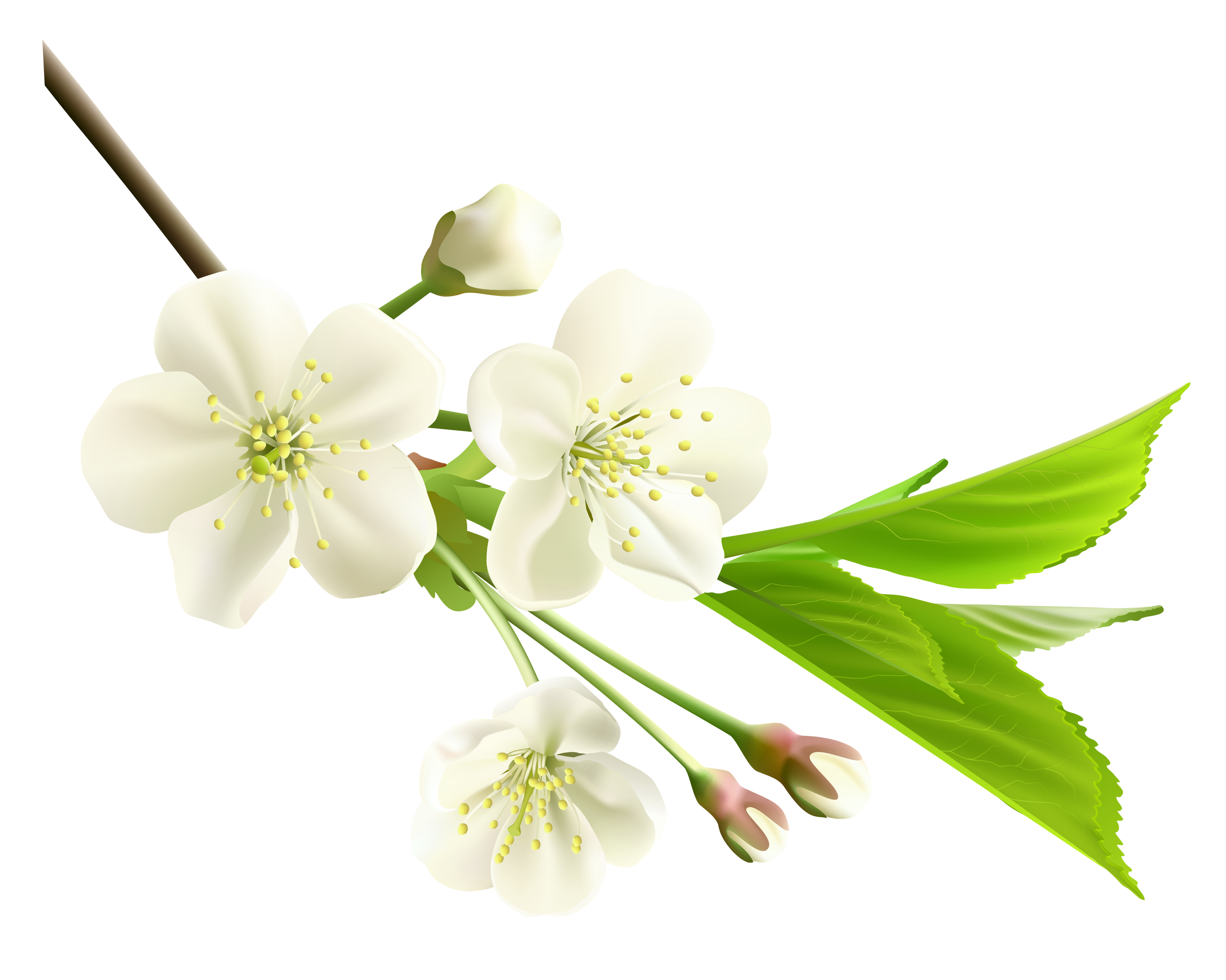 Jasmine flower clipart black and white graphic black and white download Spring Branch with White Tree Flowers PNG Clipart | Godly ... graphic black and white download