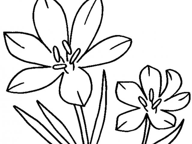 Jasmine flowers line clipart black and white graphic free download Jasmine Flower Clipart - Cooler Home Designs graphic free download